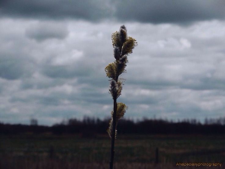 Natuur, #ANspeciallyphotography