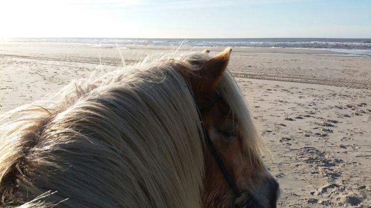 Super exclusieve paardrijden strandrit. Een top adres voor heerlijk paardrijden strandrit. Over het rustige strand op lieve paarden. Heerlijk!