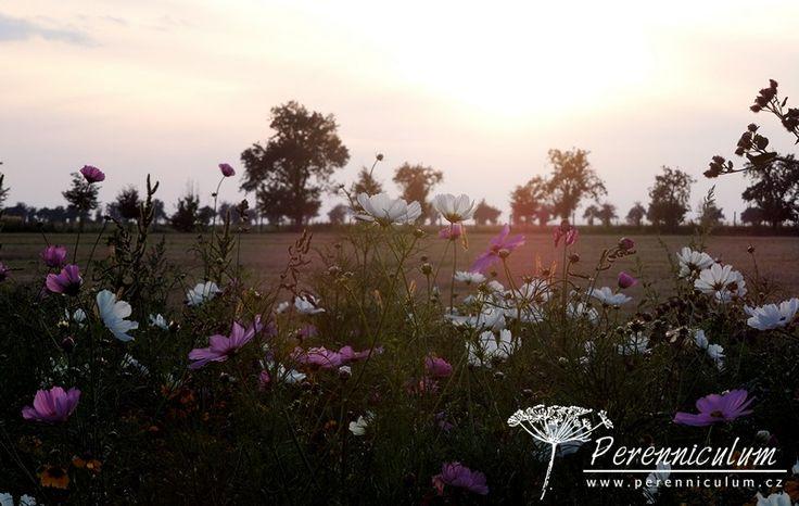 Pozdní odpoledne babího léta - aneb letničková louka při západu slunce.