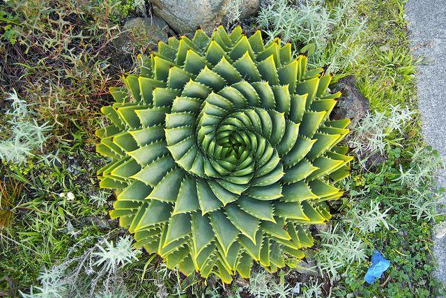Spirals In Nature | Spirals in nature | Flickr - Photo Sharing!