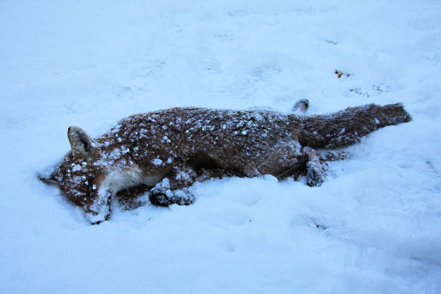File:Victim of the weather - geograph.org.uk - 1628462.jpg