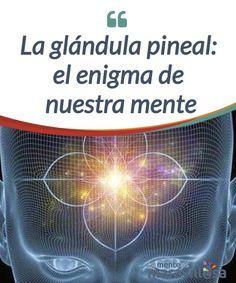"""La glándula pineal: el enigma de nuestra mente    La #glándula #pineal ha suscitado desde siempre un gran interés. Descartes decía de esta pequeñísima glándula alojada justo en el centro de nuestro cerebro, que era el """"asiento"""" del #alma y el núcleo donde se gestaban todos nuestros #pensamientos. No falta quien habla también de esta estructura como nuestro """"tercer ojo"""",   #Curiosidades"""