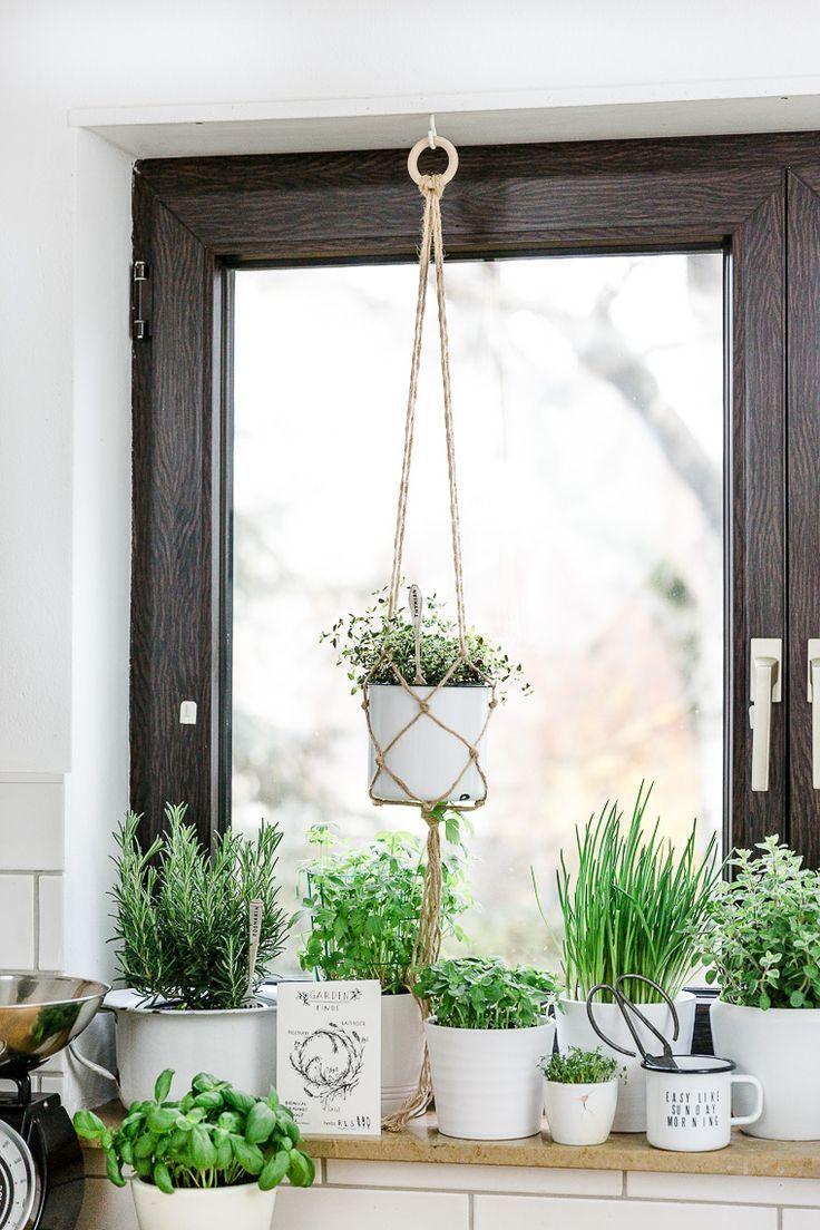 Ein Kräutergarten in der Küche. Schaffe deinen e…
