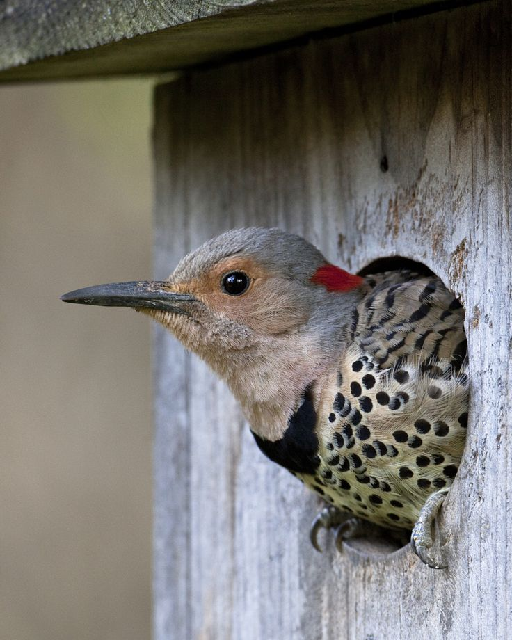 Top 25 ideas about building bird houses on pinterest for Types of birdhouses for birds