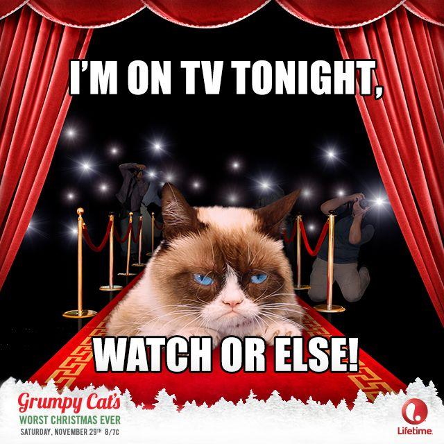10+ images about Grumper cat on Pinterest | Grumpy cat ...