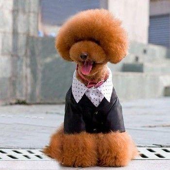 Soft Cotton Made Fancy Suit for Pet Clothes & Fashion Dog Dress SIZE L