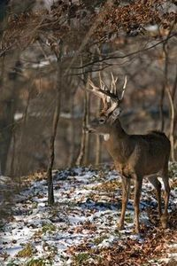 How to Deer Hunt | Deer Hunting | Realtree http://riflescopescenter.com/category/leupold-riflescope-reviews/