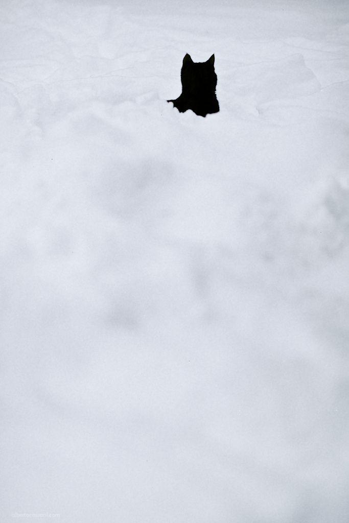 The Batcat. | by BeboFlickr