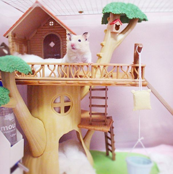 THEY CAN LIVE IN TREEHOUSES IF THEY WANT. | 16 Hamsters Livin' The Freaking Dream