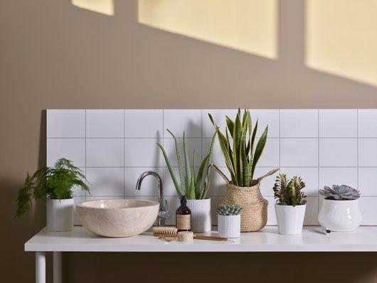 Sett gjerne grønne planter, sukkulenter og kaktuser på badet.