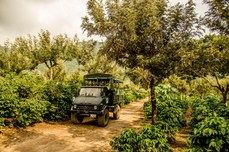 Antigua coffee tour M-Sa 8-11 AM.  You will learn the history, cultivation and processing of coffee on our farm