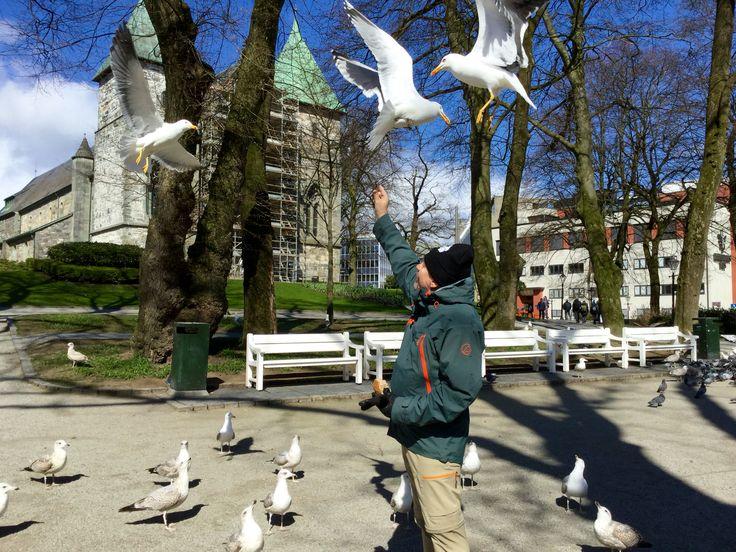 (❁´‿`❁)*✲゚*Feeding the seagulls