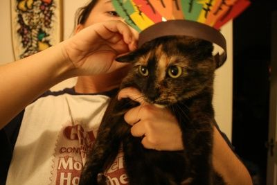 Thanksgiving Safety Tips. hanksgiving is a wonderful holiday, where we take time to appreciate our loved ones, including our furry (or not so furry) friends. However, there are some holiday related hazards to be aware of when it comes to our pets...   Read more: http://thepetwiki.com/wiki/Thanksgiving_Safety_Tips