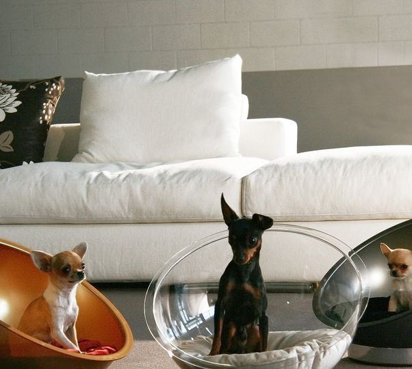 PurFect Design Creates a Stylish Bulbous Bed for Canine Companions #dogs trendhunter.com