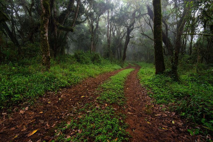 winding path in an indigenous forest  I  Magoebaskloof, Limpopo, South Africa