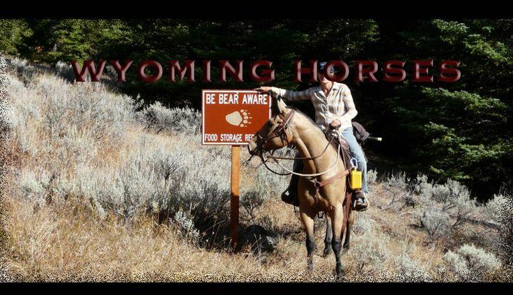 Wyoming Horses - Quality Horses & Equipment for Lease - Summer Season.