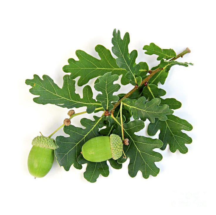 ... de feuilles, Feuilles de chêne et Tatouage de feuilles dautomne