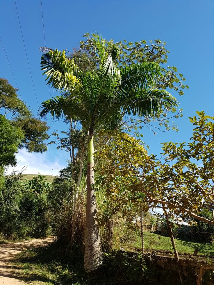 Área rural em Cordeiro - RJ - Brasil .                                                  Foto _____Iara Rocha.