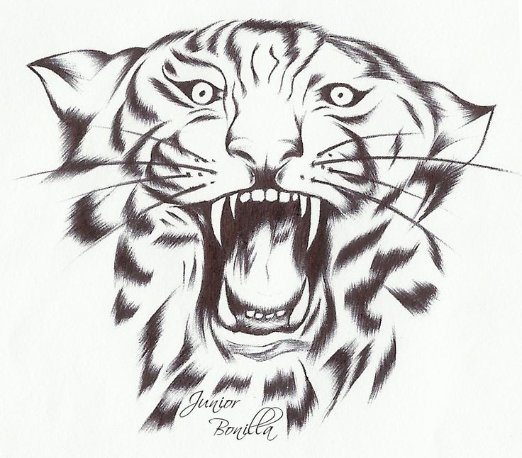 Dibujo+de+un+tigre.jpg (869×763)