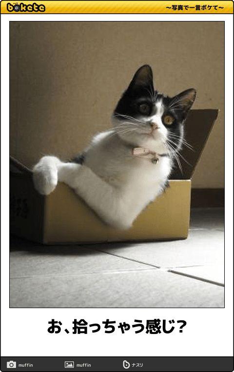 腹筋ガタガタ!2秒で笑うネコの傑作ボケて16選
