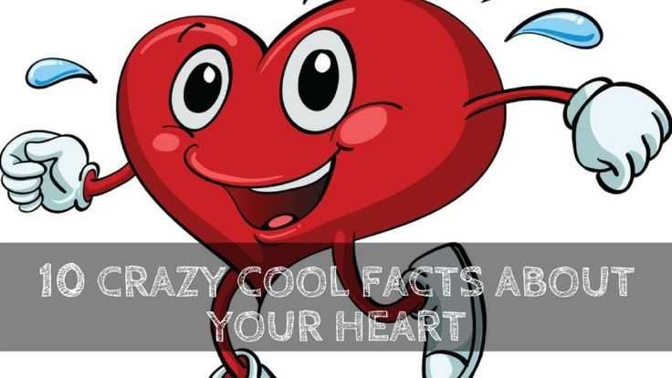 10 Crazy Cool Facts About Your Heart - That you surely Did't Knew
