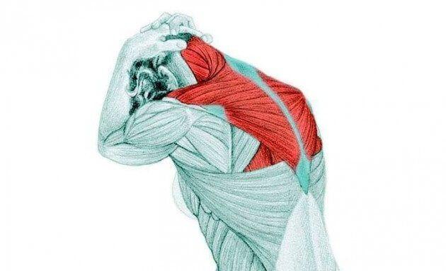 Трапециевидная мышца часто является источником боли и жжения в плечах, верхней…