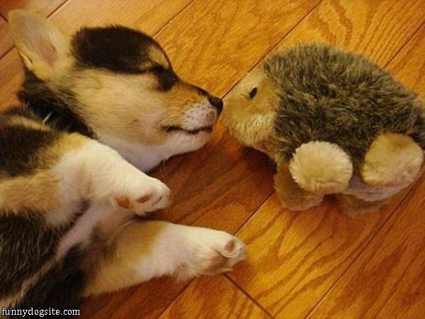 Funny Puppy Dog Pictures | Funny Sleeping Dogs Pictures | Funny Ugly Dog Pictures