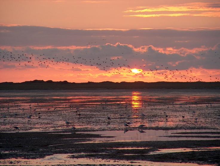 24 uur verblijven op het Wad.    Aan boord van de tjalk Larus vindt in augustus 2013 een uniek arrangement plaats:  In 24 uur gaat u alle aspecten van de Waddenzee ontdekken. Zeilen, droogvallen en overnachten op het Wad.