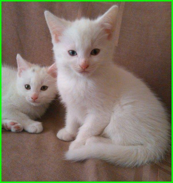 Gambar Kucing Lucu Imut Dan Paling Menggemaskan Sedunia Gambar Kucing Lucu Kucing Lucu Kucing