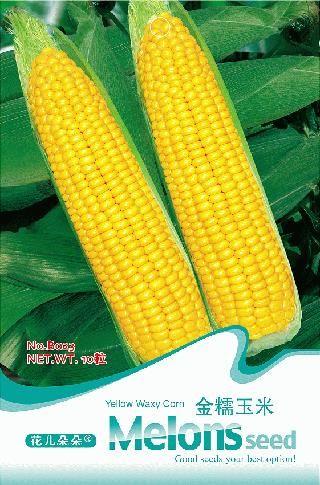Золото восковые семена кукурузы бонсай - золото питание - 10 b023 вкус семена для дома и сада бонсай растений парниковых бесплатная доставка