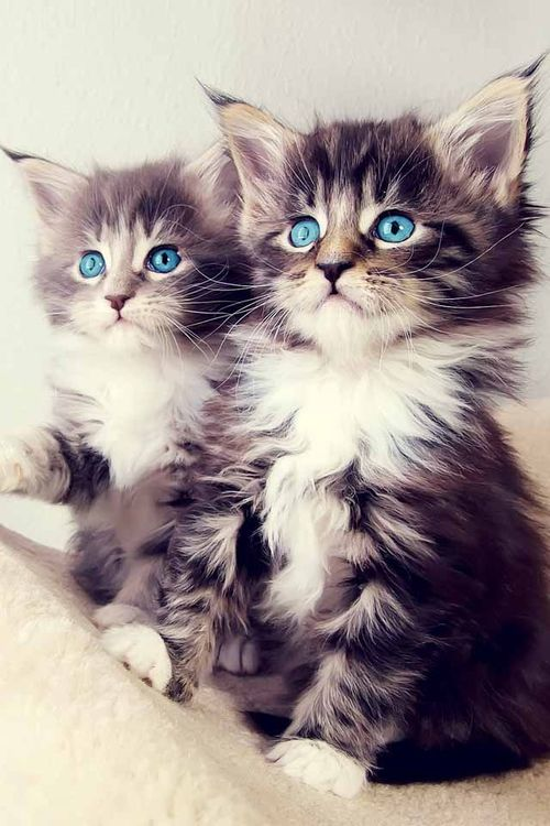 heartless-fairytale:  Kitties on We Heart It. http://weheartit.com/entry/91980038?utm_campaign=share&utm_medium=image_share&utm_source=tumblr