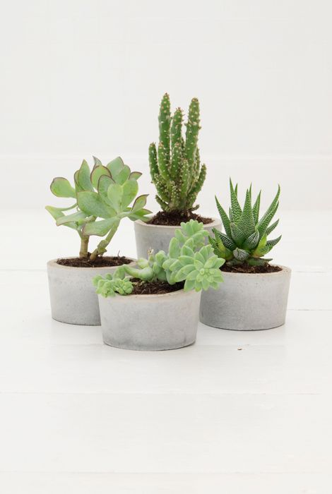 (concrete planter diy by woonblog)