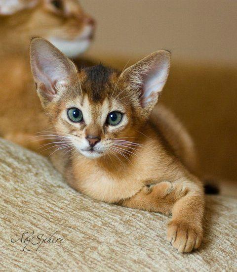 beautiful kitten ,