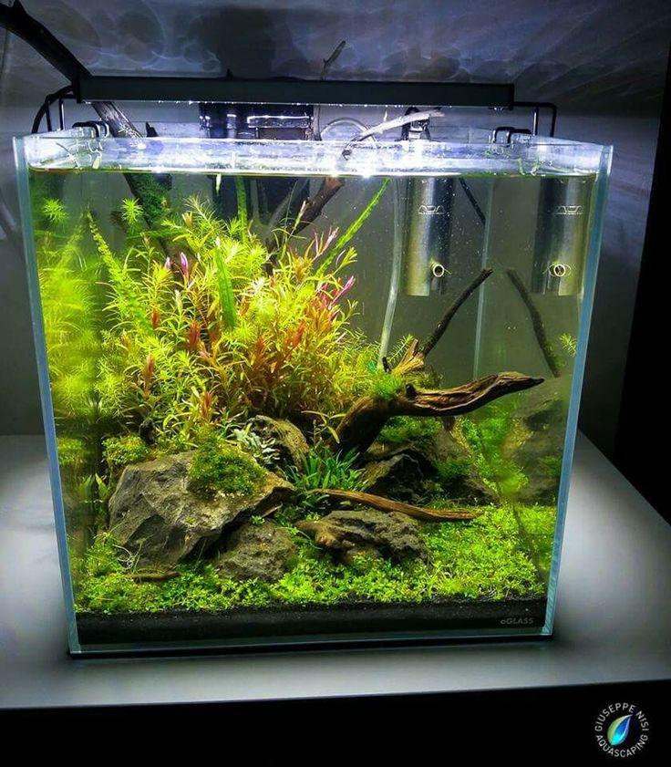 17 Best Images About Nano Aquas On Pinterest