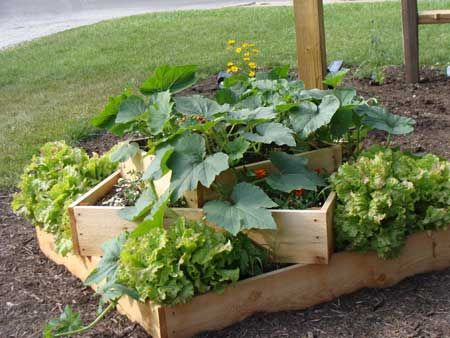 Small vegetable patch. Perfect