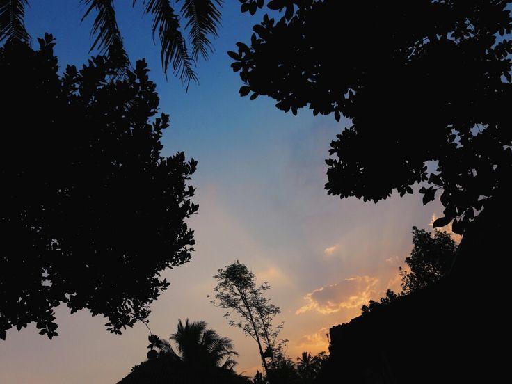 sky x tree x blue x orange