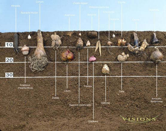 Planting bulbs in layers                                                                                                                                                                                 More