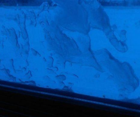Imagini din TRENUL GROAZEI. În ce condiții INUMANE  au călătorit sute de oameni, luni dimineața  - Sute de oameni au stat blocați în câmp în trenul interregio București – Constanţa, după ce garnitura a rămas înzăpezită în localitatea Dragoş Vodă din județul Călăraşi. Un arădean care se afla în tren ne-a transmis imagini cu coșmarul prin care au trecut ...