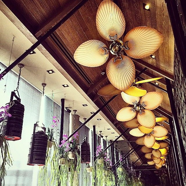 How cool are these hanging orchids and large ceiling fans?