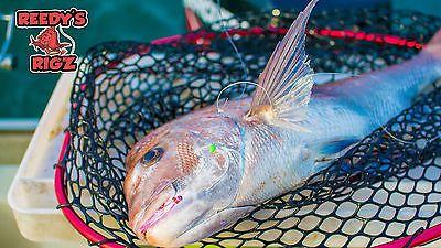 snapper season fishing with flasher rig | eBay