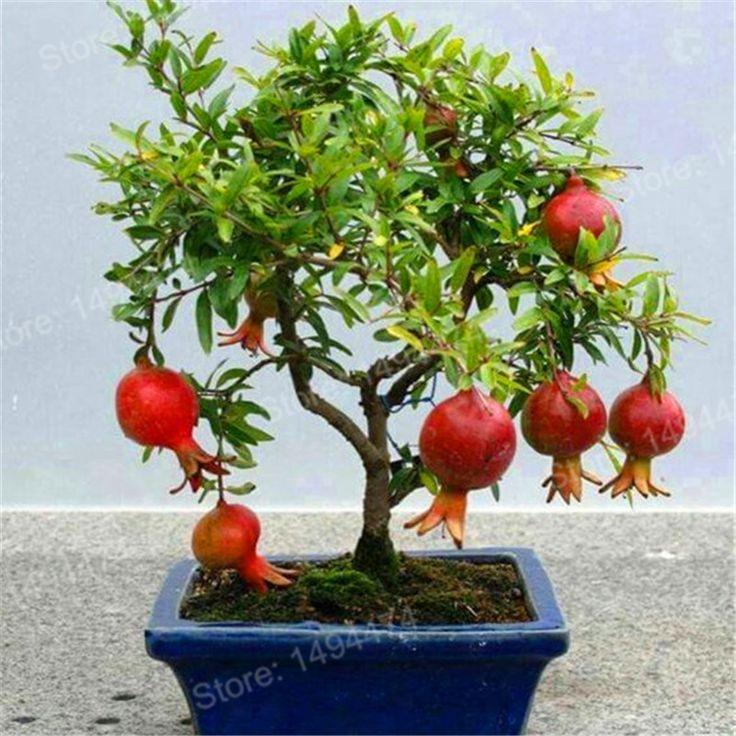 100 шт. семена граната мини Гранатовое дерево Семена очень сладкий вкусные фрукты семена бонсай фрукты растений для дома и сада