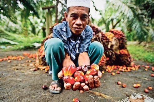 Entrée fracassante en Bourse d'un géant de l'huile de palme