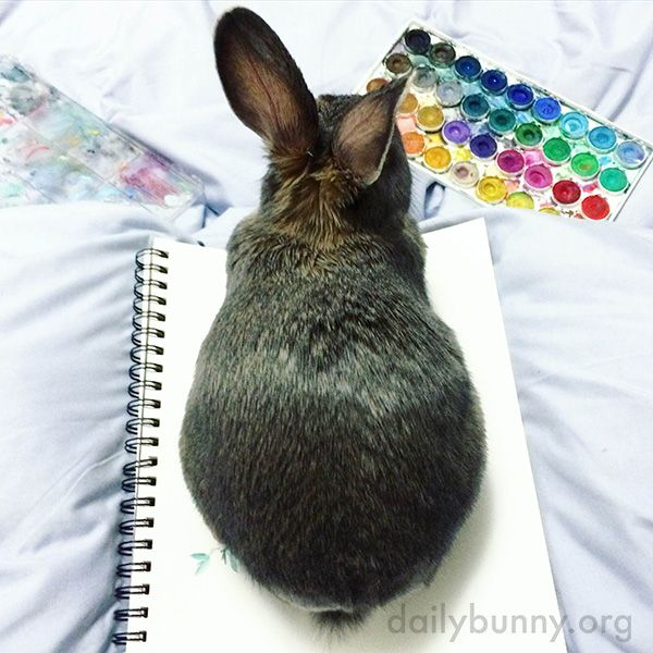 This Is Bunny's Way of Telling Human He Would Like to Be Petted Now, Please