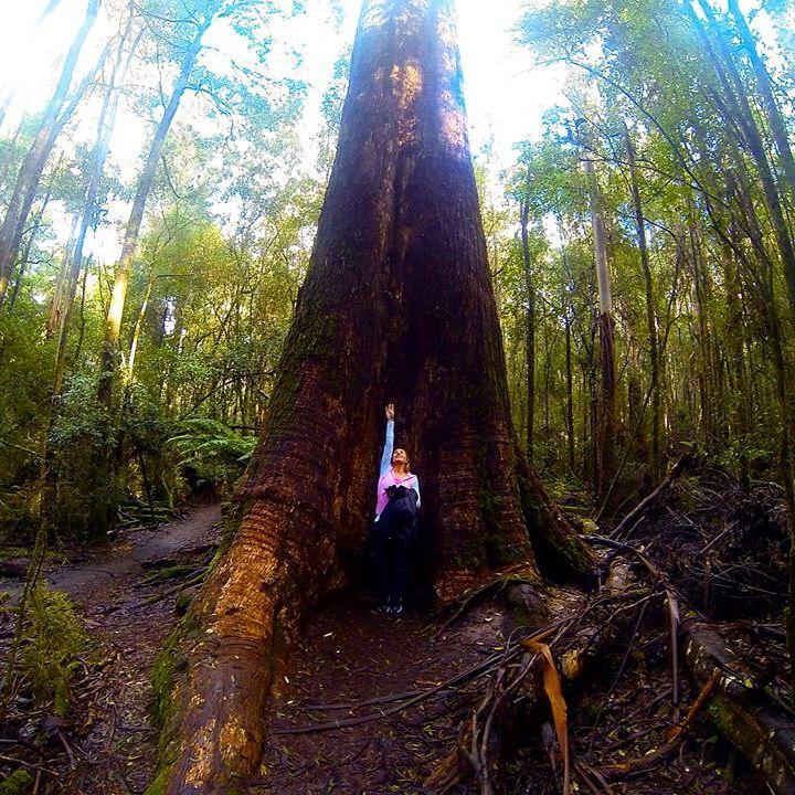 Mt Fields National Park Tall Tree Walk