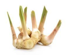 Galangal Plant Info: Learn About Galangal Plant Care And Usage - Pronounced guh-LANG-guh, galangal is often mistaken for ginger. This plant is grown primarily for its ornamental qualities and underground rhizomes, which are used to flavor a variety of ethnic dishes. What to learn how to grow galangal? Click here.