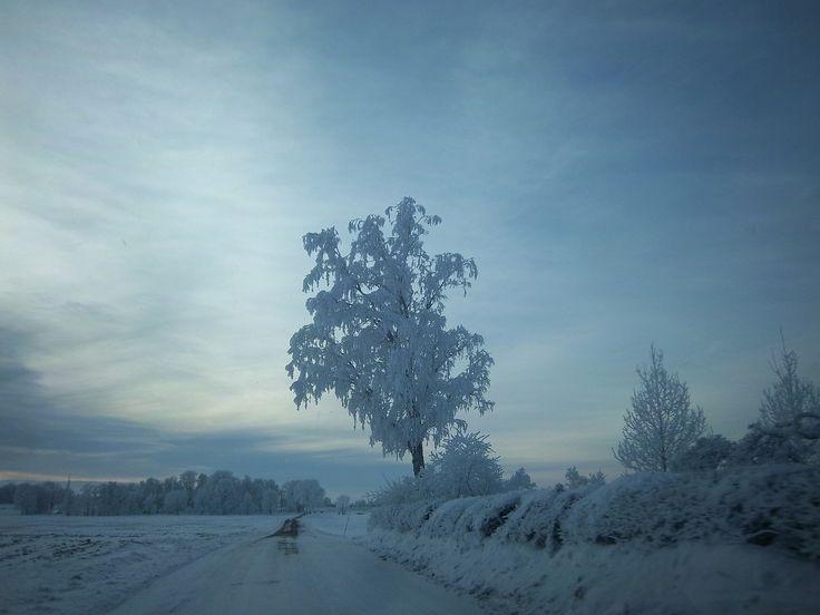 Arbol congelado 2