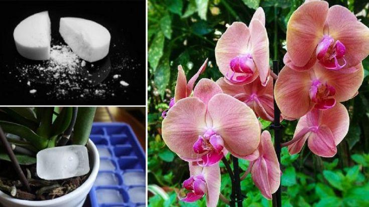 Hogyan gondozd az orchideát, hogy egészséges legyen és rengeteg virágot hozzon