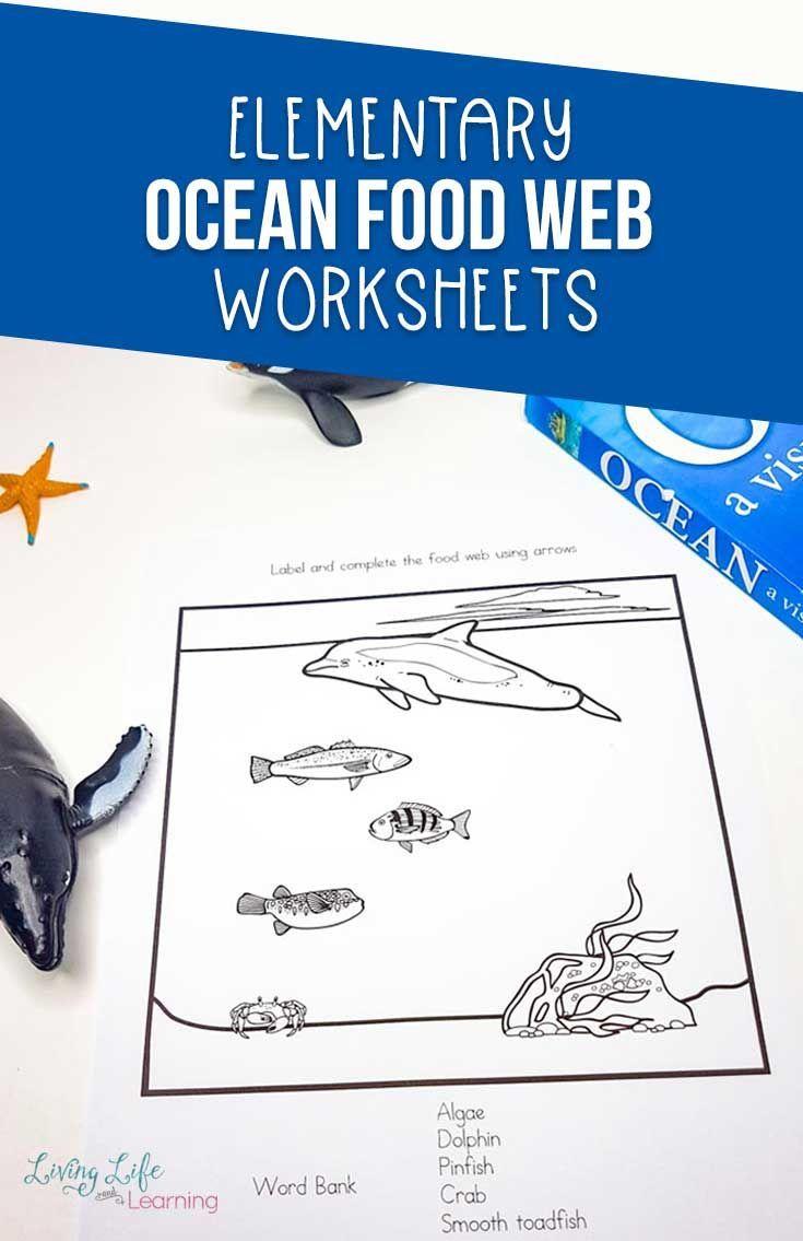 Ocean Food Web Worksheets Ocean Food Web Food Web Worksheet Food Web