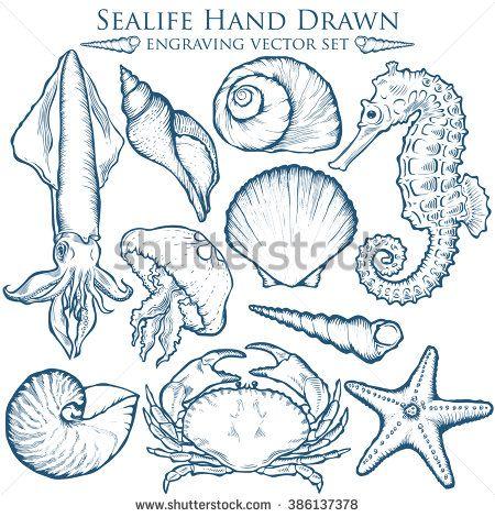 Seashell, sea shell, starfish nature sea ocean wild aquatic underwater vector set. Sea shell Hand drawn seashell marine engraving illustration on white background. Sea shell etch sketch drawing. - stock vector