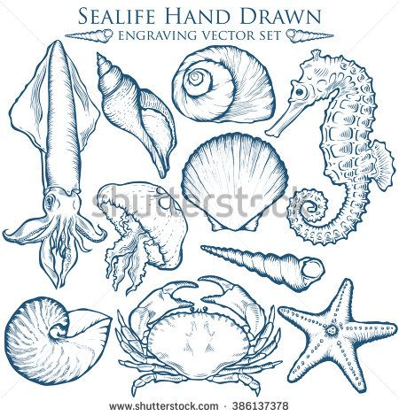 Seashell, sea shell, starfish nature sea ocean wild aquatic underwater vector set. Sea shell Hand drawn seashell marine engraving illustration on white background. Sea shell etch sketch drawing. - stock vector